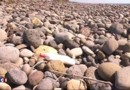 La Réunion : poupée, chaussure, canette... après la découverte du débris, la chasse aux trésors macabre