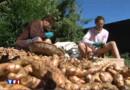 Ile de la Réunion : le curcuma, le trésor de la gastronomie créole
