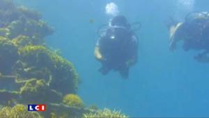 Et si le salut des coraux venait de l'électricité?