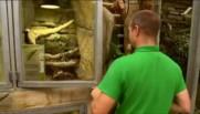 Zoo de Beauval : immersion aux côtés des soigneurs