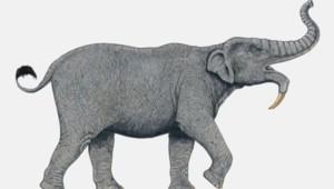 éléphant préhistorique