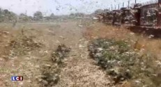 Russie : l'état d'urgence décrété dans une région envahie par... des criquets