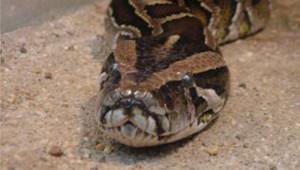 Tf1 / LCI un python