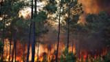 Avec la canicule, l'incendie à Lacanau sous étroite surveillance