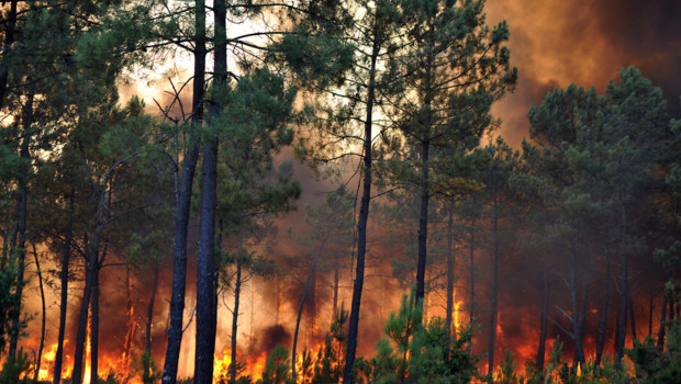 Incendie à Lacanau, en Gironde, le 16 août 2012