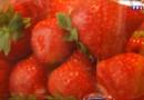 Le 13 heures du 28 juillet 2015 : Fraises, tomates, melons : cet été, leur cote de popularité baisse - 577
