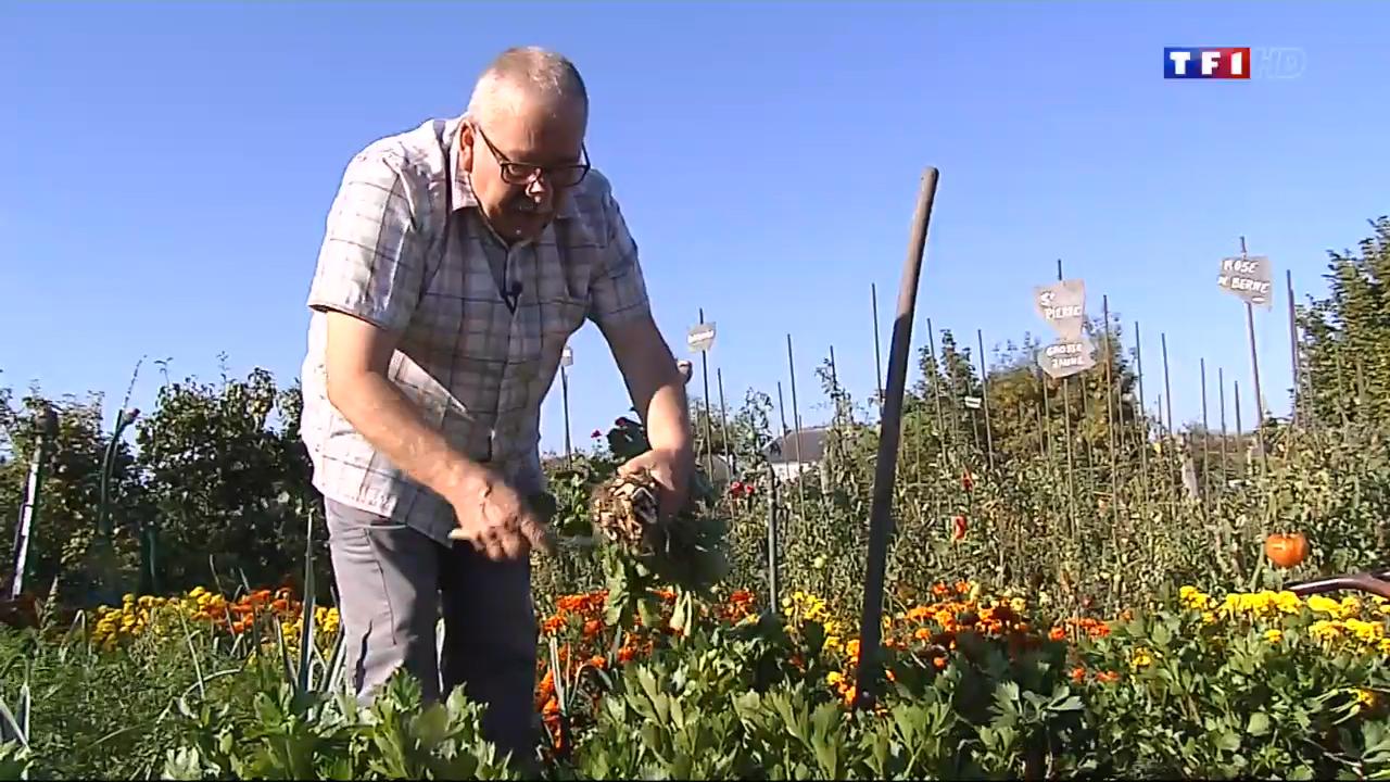Jean marc le jardinier r colte ses premiers l gumes d for Prix jardinier heure
