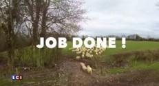 Un berger remplace son chien... Par un drone