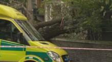 Chute d'un arbre à Londres