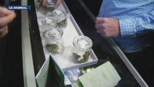 Le cannabis désormais en vente légalement dans le Collorado
