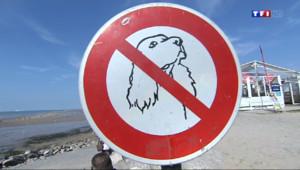 Le 13 heures du 8 août 2014 : Attention, plages interdites aux chiens dans le Pas-de-Calais - 1104.422