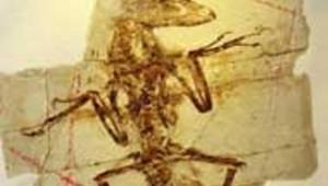 fossile paléontologie dinosaure
