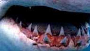 machoires requin