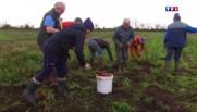 Bretagne : des retraités bénévoles distribuent leurs légumes à des associations