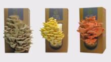 Des champignons qui poussent à la maison, une innovation récompensée par le Sial 2014.