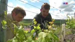 """Révolution chez les viticulteurs : du vin """"sans indication géographique"""" pourra être vendu"""