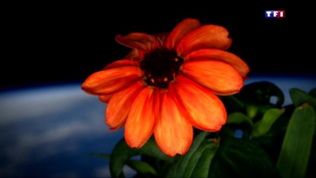 La première fleur de l'espace a vu le jour
