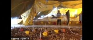 Bolivie : les cadavres de milliers de volailles mortes sous de violentes chutes de grêle