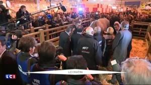 Hollande rend visite à Cerise, la star du salon de l'Agriculture