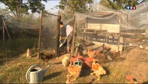 Le 13 heures du 16 août 2013 : Camping �a ferme - 1313.2050000000002