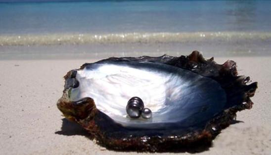 Perle de Tahiti Dr-2466307_1511