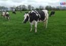 Le 20 heures du 31 mars 2015 : Fin des quotas laitiers : une chance ou une menace pour la France - 680.01