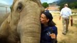 Stéphanie de Monaco a adopté deux éléphantes