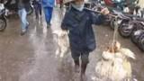 Grippe aviaire : la Chine en état d'alerte