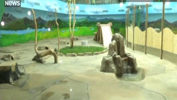 Chine : une maison de pandas géants ouverte au public