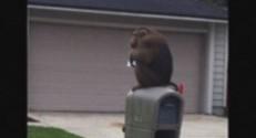 Floride : un macaque erre dans les rues (29/09)