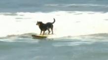 Chiens surf (03/08)