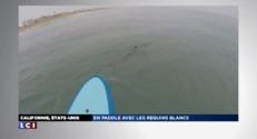 En paddle avec les requins blancs