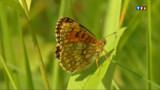 VIDEO. 50% des papillons de prairie ont disparu en moins de 20 ans