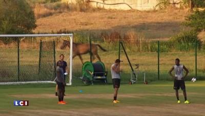 Ligue 1 : le Gazélec Ajaccio dans la cour des grands