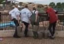 Marineland : les pompiers mobilisés pour sauver les animaux