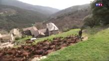 Quand la consommation du lait de chèvre augmente