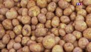 La pomme de terre, patrimoine culinaire de Noirmoutier