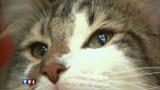 Sydney impose un couvre-feu... aux chats