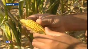 L'auteur de l'étude sur les OGM doit fournir davantage d'informations