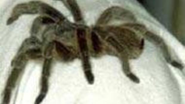 traitement phobie réalité virtuelle araignée nette DR: La Pitié-Salpétrière