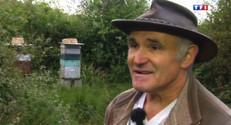Le 13 heures du 28 août 2014 : Frelon asiatique : le cri d%u2019alarme des apiculteurs bretons - 1233.6989179992677