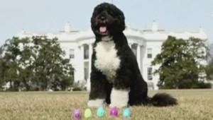 Bo le chien des Obama