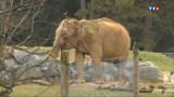 """Eléphantes menacées d'euthanasie : le propriétaire """"effondré"""""""