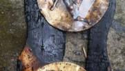 Le bouclier passé au barbecue par les joueurs de Chamalières.
