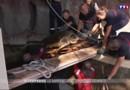 Inondations meurtrières : à Marineland, l'urgence est de sauver les animaux