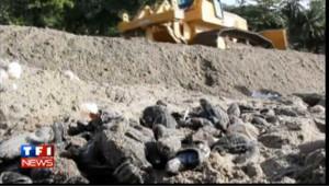 Le plus grand nid de tortue de mer détruit par un chantier, les images
