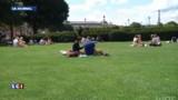 Paris : les pelouses du Louvre, une vraie cantine pour les rats