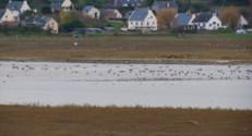 Le 13 heures du 20 décembre 2014 : La Bretagne, paradis des oiseaux migrateurs - 999.202924194336