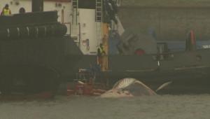 Une baleine morte dans le port d'Anvers