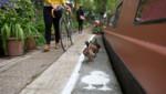 A Londres, Birmingham et Manchester, les piétons et les cyclistes devront partager les chemins de halage avec des canards.